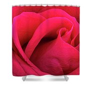 A Bright Pink Rose Close-up Shower Curtain