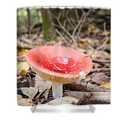 A Bright Red Mushroom Blooms Shower Curtain