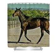A Brisk Paddock Romp Shower Curtain