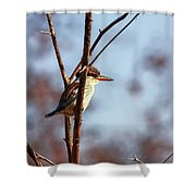 A Brown-hooded Kingfisher  Shower Curtain