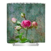 A Bud - A Rose Shower Curtain