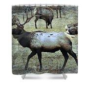 A Bull Elk  Shower Curtain