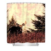 A Bull Moose Dream Shower Curtain