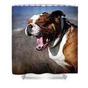 A Bulldog's Mighty Yawn Shower Curtain