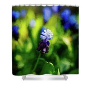 A Bunch Of Flowering Two-tone Grape Hyacinths, No.2. Shower Curtain