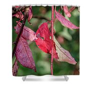 A Bunch Of Red Leaves Shower Curtain