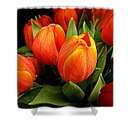 A Bunch Of Tulips Shower Curtain