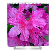 A Burst Of Pink Shower Curtain