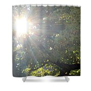 A Burst Of Sunshine  Shower Curtain