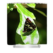A Butterfly In The Sun  Shower Curtain