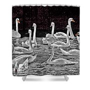 A Cacophony Of Swans Shower Curtain