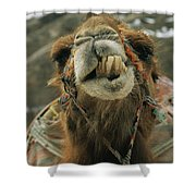 A Camel Displays Its Teeth Shower Curtain