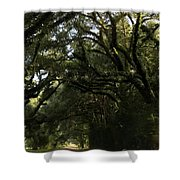 A Canopy Of Trees Shower Curtain