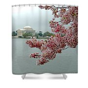 A Capital Cherry Blossom II Shower Curtain