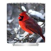 A Cardinal Day... Shower Curtain