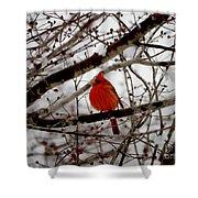 A Cardinal In Winter Shower Curtain