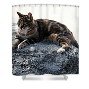A Cat From Rome Shower Curtain