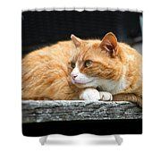 A Cat Named 'kitty' Shower Curtain
