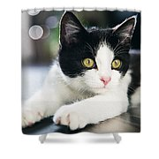 A Cat With Black And White Fur Shower Curtain
