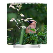 A Cedar Waxwing Facing Left Shower Curtain