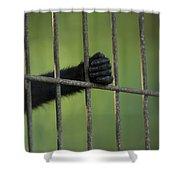 A Celebes Macaque Macaca Nigra Holds Shower Curtain