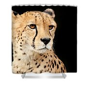 A Cheetah Named Jason Shower Curtain