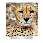 A Cheetah's Portrait Shower Curtain