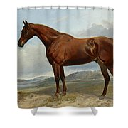 A Chestnut Hunter In A Landscape Shower Curtain