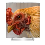 A Chicken In Burwell, Nebraska Shower Curtain