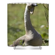 A Chinese Goose Anser Cygnoides At Zoo Shower Curtain