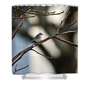 A Chipping Sparrow Shower Curtain