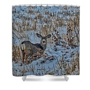 A Christmas Day Young Buck Shower Curtain