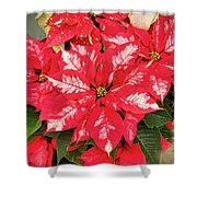 A Christmas Flower Shower Curtain