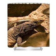 A Chuckwalla Lizard And A Skink Shower Curtain