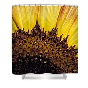 A Close-up Detail Of A Sunflower Head Shower Curtain