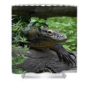 A Close Up Look At A Komodo Dragon Lizard Shower Curtain