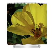 A Close Up Look At A Yellow Flowering Tulip Blossom Shower Curtain