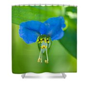 A Close-up Of A Bright Blue Flower Shower Curtain