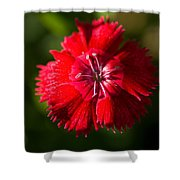 A Close Up Of A Dianthis Flower Shower Curtain