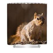 A Close-up Of A Fox Squirrel Sciurus Shower Curtain