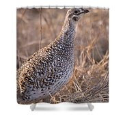 A Close-up Of A Sharptail Grouse Shower Curtain