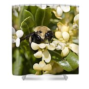 A Close View Of A Bumblebee Pollinating Shower Curtain