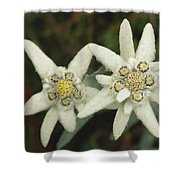 A Close View Of An Edelweiss Flower Shower Curtain