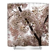 A Cloud Of Pastel Pink Cherry Blossoms Celebrating The Arrival Of Spring  Shower Curtain