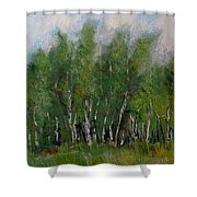 A Cluster Of Birch Shower Curtain