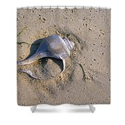 A Conch Shell Lies In The Sand Shower Curtain