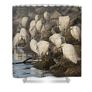 A Congregation Of Egrets Shower Curtain
