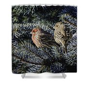 A Couple Of House Finch Shower Curtain by LeeAnn McLaneGoetz McLaneGoetzStudioLLCcom
