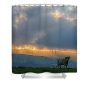 A Cow In The High Prairies  At Sunset Shower Curtain