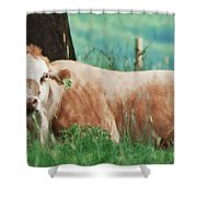 A Cow's Tale - Lazy Day Shower Curtain